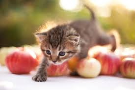 POMME CHAT
