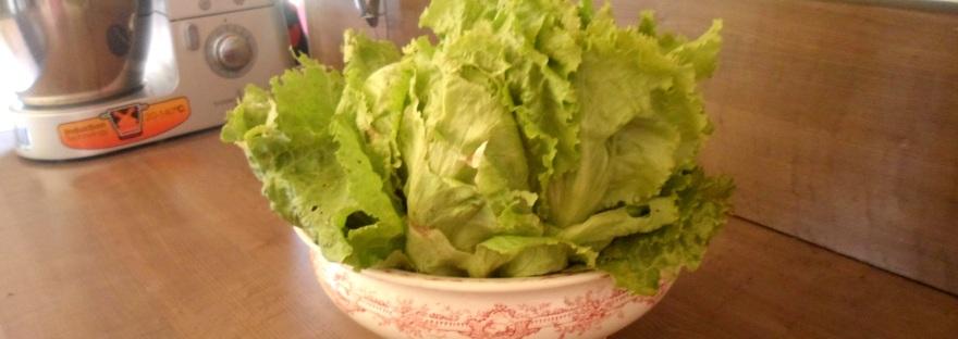 astuce pour conserver une salade fra che une dizaine de. Black Bedroom Furniture Sets. Home Design Ideas